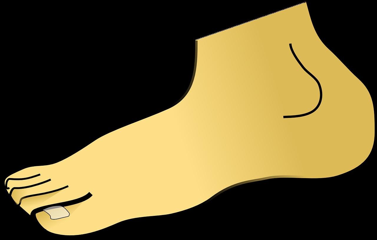 ציור של רגל